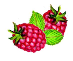 Homemade Lemon Curd - Raspberry Variation