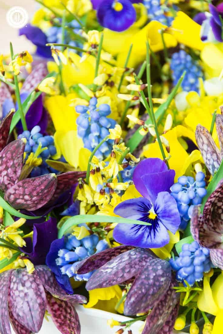 Cute mini daffodils, beautiful fritillary, pansies and muscari are the floral inspiration behind our Mill Brook Meadow pattern. | countryhillcottage.com