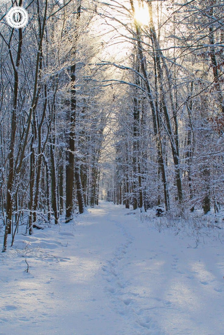 In Henry Wadsworth Longfellows Poem Woods Winter The Narrator Reflects Exuberance And Splendor