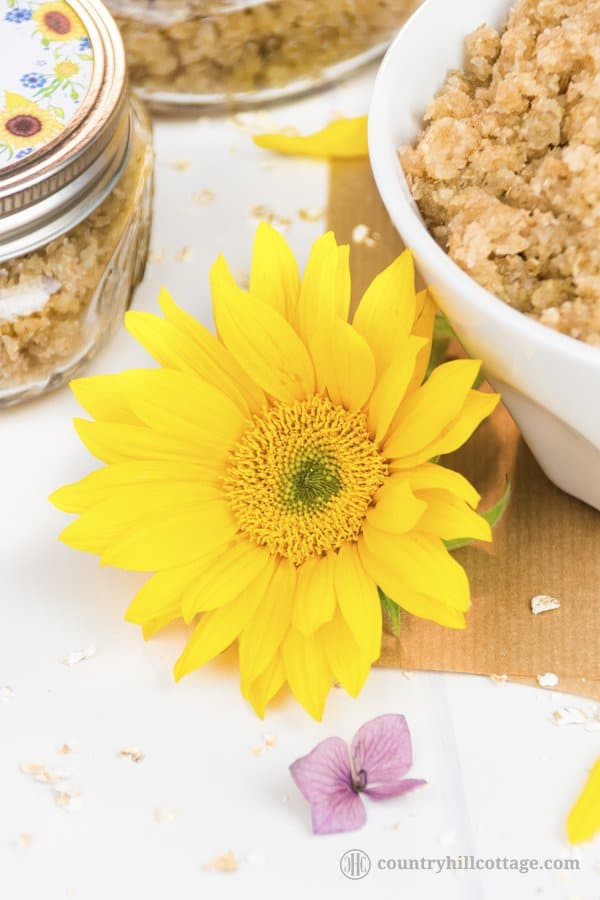 Our homemade hand scrub exfoliates dull skin and is made with oats, sugar, Manuka honey, wheat germ oil and essential oils. This gentle DIY exfoliant also moisturises the skin, chapped cuticles and nails. The scrub is suitable for all skin types and can be used to exfoliate other parts of the body, such as the neck and arms. The scrub also doubles as a revitalising hand mask and makes a great DIY beauty gift. #handscrub #scrub #essentialoils #skincare | countryhillcottage.com