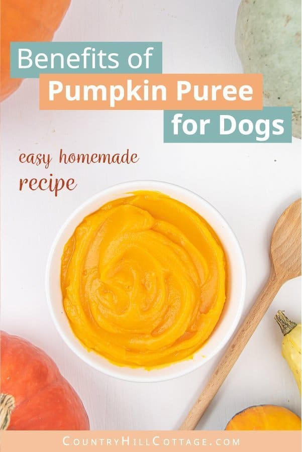 Homemade pumpkin puree is beneficial for dogs. The fiber, vitamins, and minerals in pumpkin help to keep your dog healthy. Feeding your dog pureed pumpkin can also ease a couple your pup's digestive issues. To help dogs suffering from diarrhea, constipation or an upset stomach, mix 1 to 2 tablespoon pumpkin puree into your dog's food. Pumpkin puree can also help to regulate the weight of dogs struggling with obesity. #dogfood #dogs #doghealth #petcare #petfood #pumpkin | countryhillcottage.com