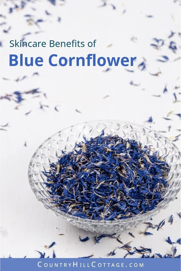 Skincare benefits of cornflower petals - Dried cornflower petals have a mesmerizing blue colour and a calming floral scent. The herb is rich in minerals and flavonoids, and has astringent and anti-inflammatory properties that are excellent to soothe the skin. Blue cornflower may also be helpful to help with eczema and to strengthen hair and nails. #cornflower #bluecornflower #driedflowers #herbalism | countryhillcottage.com
