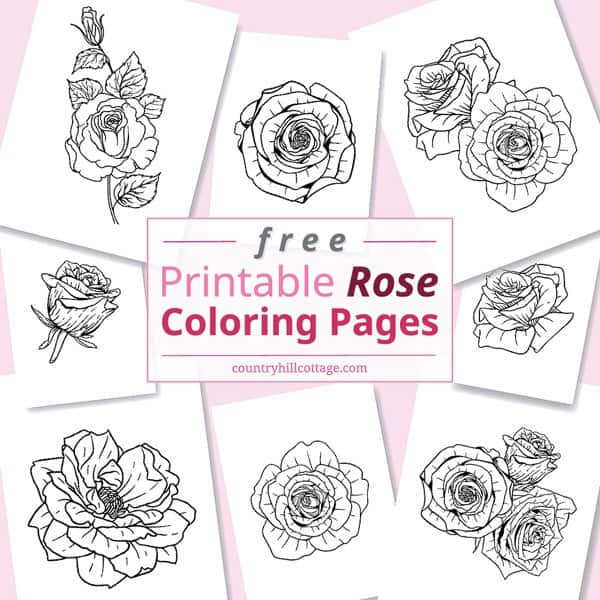 Free Printable Rose Coloring Pages {10 Realistic Designs for Adults}