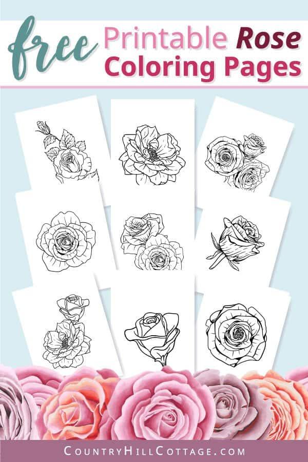 free rose coloring sheets