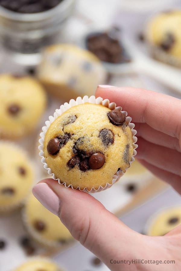 mini muffins with chocolate chips
