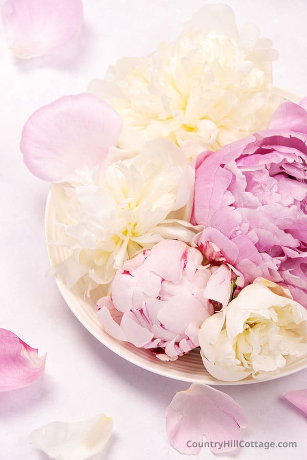 what does peony smell like